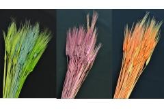Fiori 50 Spighe Naturali Essiccate 75 Cm